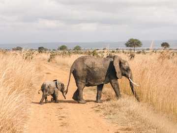 Ελέφαντας και ελέφαντας - Μ ............................