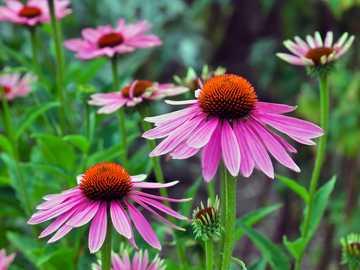 Flores desabrochando em agosto - M .....................