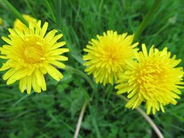 Κίτρινα άνθη - Μ ............................