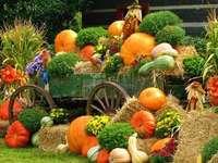 Composição de outono - Composição de outono, abóboras .....