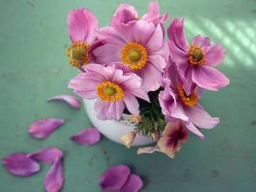 flores de pétalas rosa em um vaso