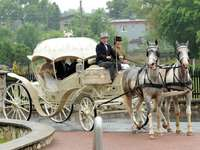 A carriage for celebrations