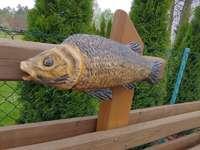 hal a kerítésen