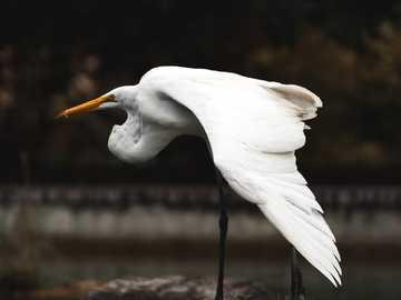 Schlagen Sie eine Pose Birdy - weißer langbeiniger Vogel auf Stein.