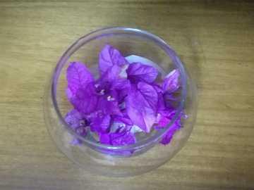 Santa ritas violets