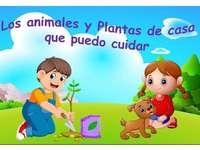 Cuidado por las plantas y animales.