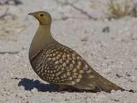 Steperul namibian