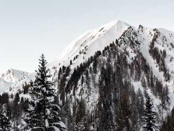 Планините чакат изгрева ... - планина, покрита със сняг и заобиколена от дървета. Три