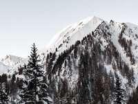 Les montagnes attendent le lever du soleil… - montagne couverte de neige et entourée d'arbres. Tristenbach, Weissenbach, Italie
