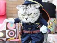 álcázás macskának - m .......................