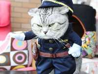 disfraz de gato - m .......................