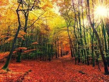 outono colorido na floresta - m .......................