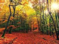 outono colorido na floresta