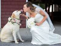 little dog in a wedding session - m .......................