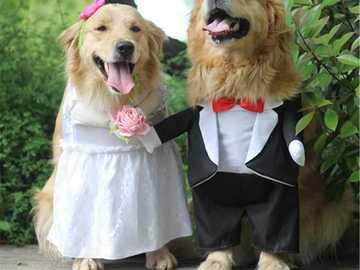 kläder för hundar - m .......................