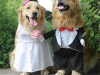 дрехи за кучета - м .......................