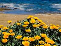 flowers on the portuguese beach - m .........................
