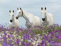 horses in the flower meadow - m .........................