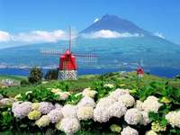 mountains, windmill, flowers - m .........................