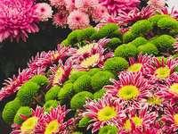 Chryzantemy - Chryzantemy, kwiaty, kolorowe, różowe, żółte