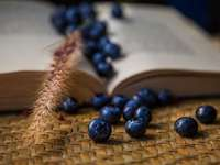blauwe bessen op bruin geweven mand - blauwe bessen en tarwe op een open boek.