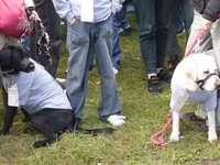 Pieski w terenie - Psy biorące udział w spacerze na rzecz dzieci.