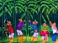 Snižování banánů - Matias Gonzalez Chavajay, Guatemala