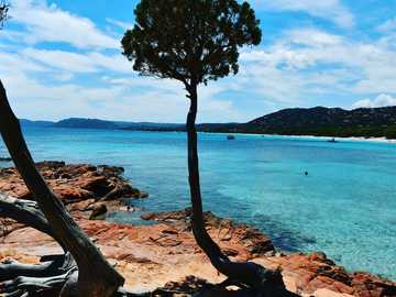 Palombaggia Beach - brown tree on brown rock formation near body of water during daytime. Palombaggia, Porto-Vecchio, Fr