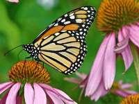 borboleta colorida - m .......................