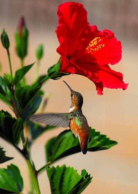 fiore rosso con un colibrì - m .......................