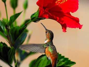 piros virág egy kolibri - m .......................