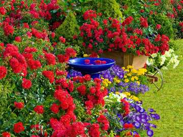 flowers in the garden - m .......................