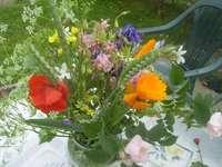 divoké květiny