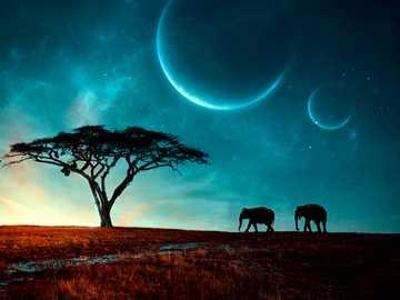 hold és elepants - a hold és az elefántok