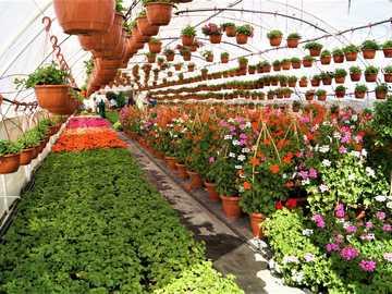 az üvegházban - növények termesztése üvegházban