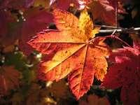 Jesienny liść - Połącz oba obrazy i zobacz, co otrzymasz!
