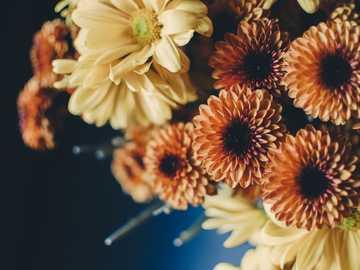 bouquet beige e fiori d'arancio - Fiori arancioni e gialli in primo piano.