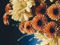 buquê de flores bege e laranja - Flores laranja e amarelas em close-up.