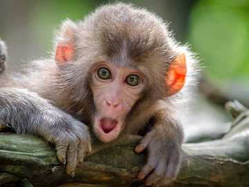 surprised monkey - m ........................