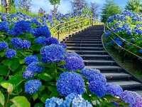 Hydrangea vertigo. - Jigsaw puzzle. flowers. Hydrangeas.