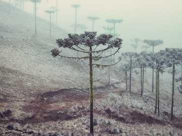 Exotisme van de winter - Winterbomen met een exotische uitstraling bedekt met rijp