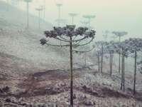 Зимна екзотика - Зимни дървета с екзотичен вид, покрити със слана