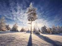 Soleil glacial