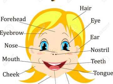 părți ale feței - joc de părți ale feței pentru copii