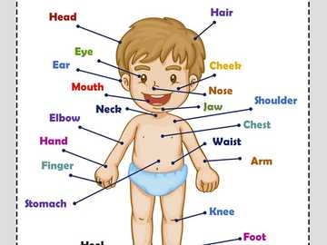 body parts - game of body parts in english for children