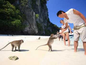 an island with tame monkeys - m ............................