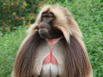małpa.... - m......................