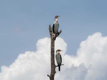 två fåglar som sitter på trädet - Två fåglar på sjön Naivasha under en safari i Kenya, Afrika. Lake Naivasha, Naivasha, Kenya