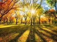 sol de outono - árvores no sol de outono