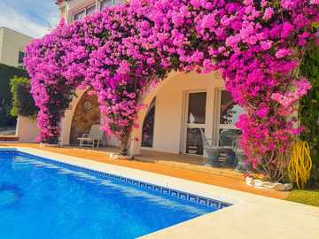 Flowers on the wall - Flowers on the wall, pink, pool